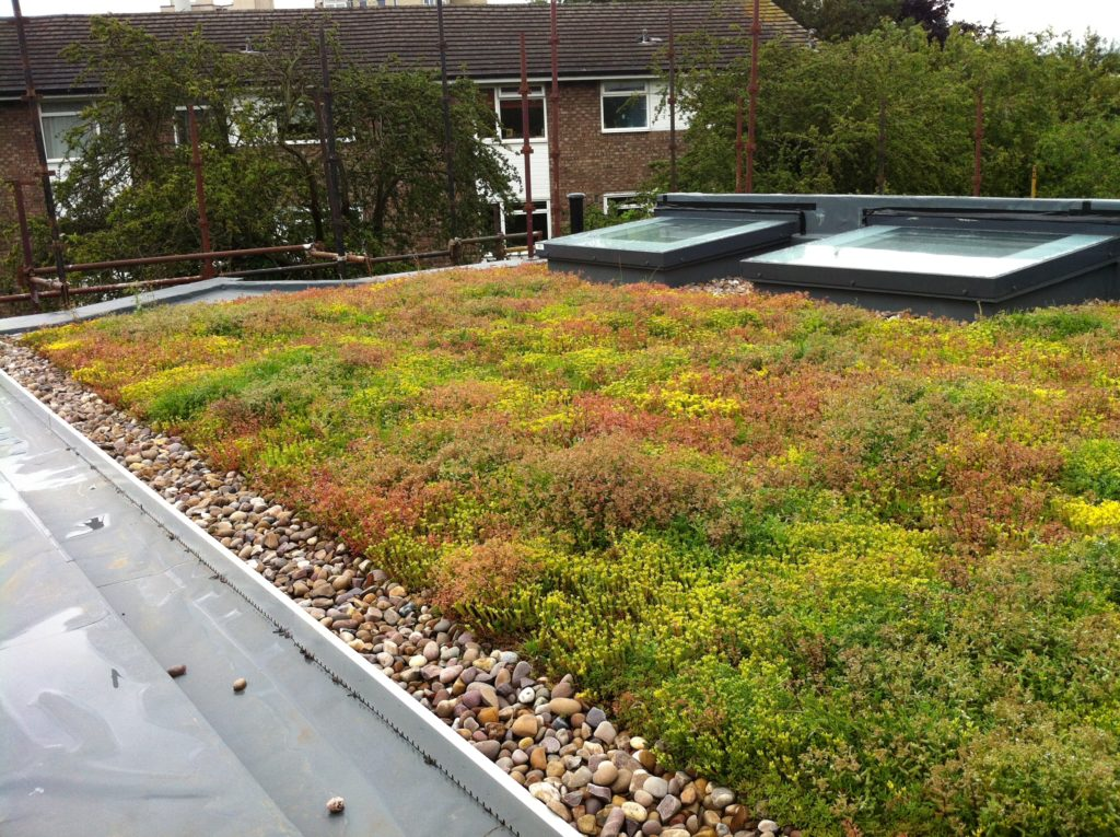 Df Roofing Waterproofing Solar Green Roofs